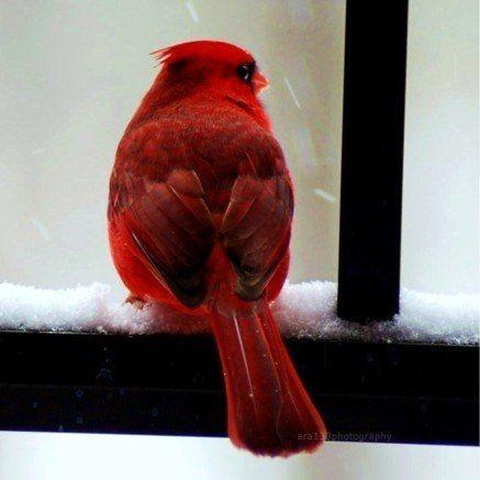 The bird of Christmas... (c) stellarsky