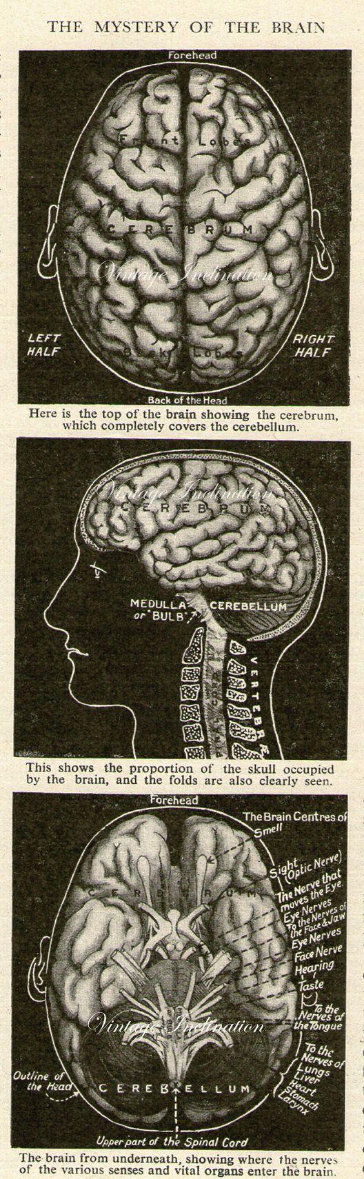 78 best Brain Stuff :) images on Pinterest   Neurology, Human ...