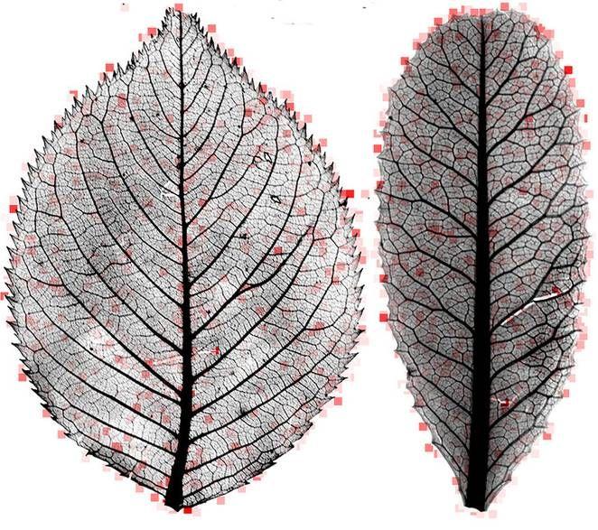 Computer program solves mysteries of fossilized leaves : TreeHugger