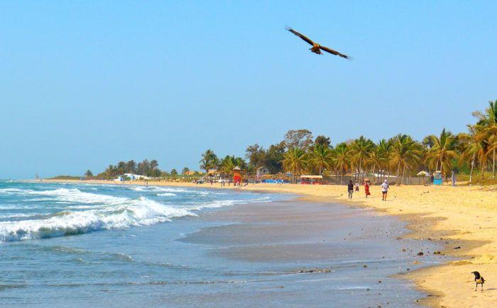 #Natur Gambia: Reiser som kombinerer avslappende solferie og spennende, autentiske opplevelser, står høyt i kurs for tiden. I Gambia kan norske turister nyte dagene på de gylne sandstrendene ved kysten eller dra på oppdagelse inne i landet. Her finner man både et rikt dyre- og fugleliv, historisk stammekultur og tradisjonelle fiskersamfunn. UNESCO-øya Kunta Kinteh var også et sentralt sted under perioden med slavehandel.