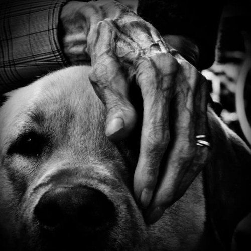 Old man with dog. #hand #photography