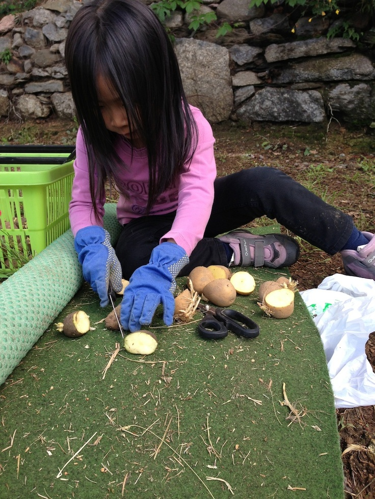 Piantare le patate nei sacchi di juta / Plant patatoes in bags