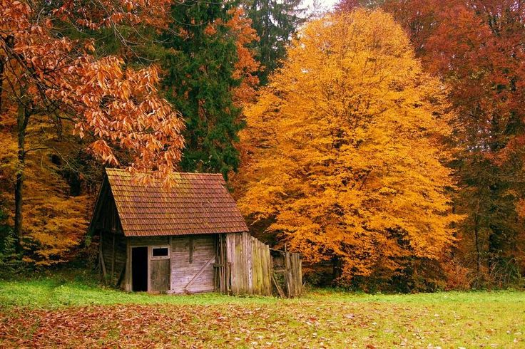 As 5 Casas de Floresta mais Maravilhosas - Cultura | ChiadoNews