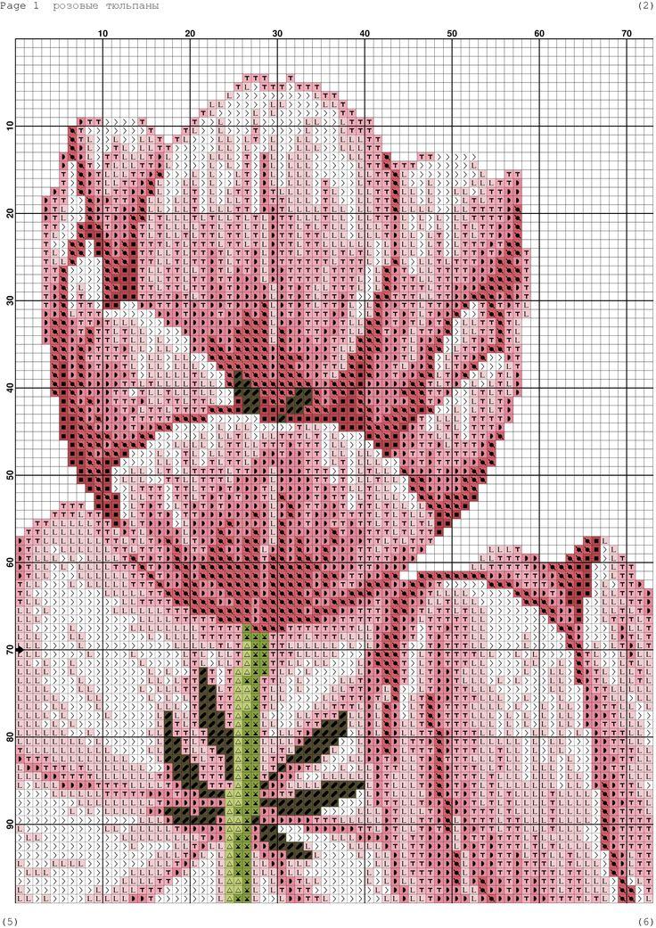 Fresh Tulips 3