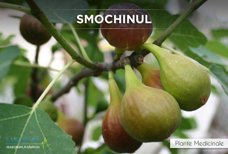 Frunzele de smochin contin anumite substante care au capacitatea de a trata diabetul de tip 1. http://www.i-medic.ro/plante/smochin
