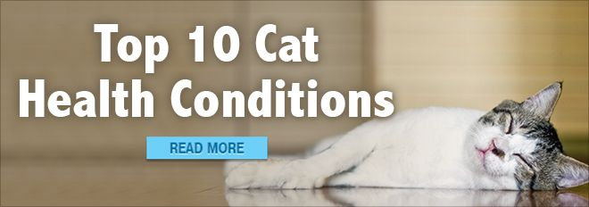 Adult | Cat Care Center | petMD