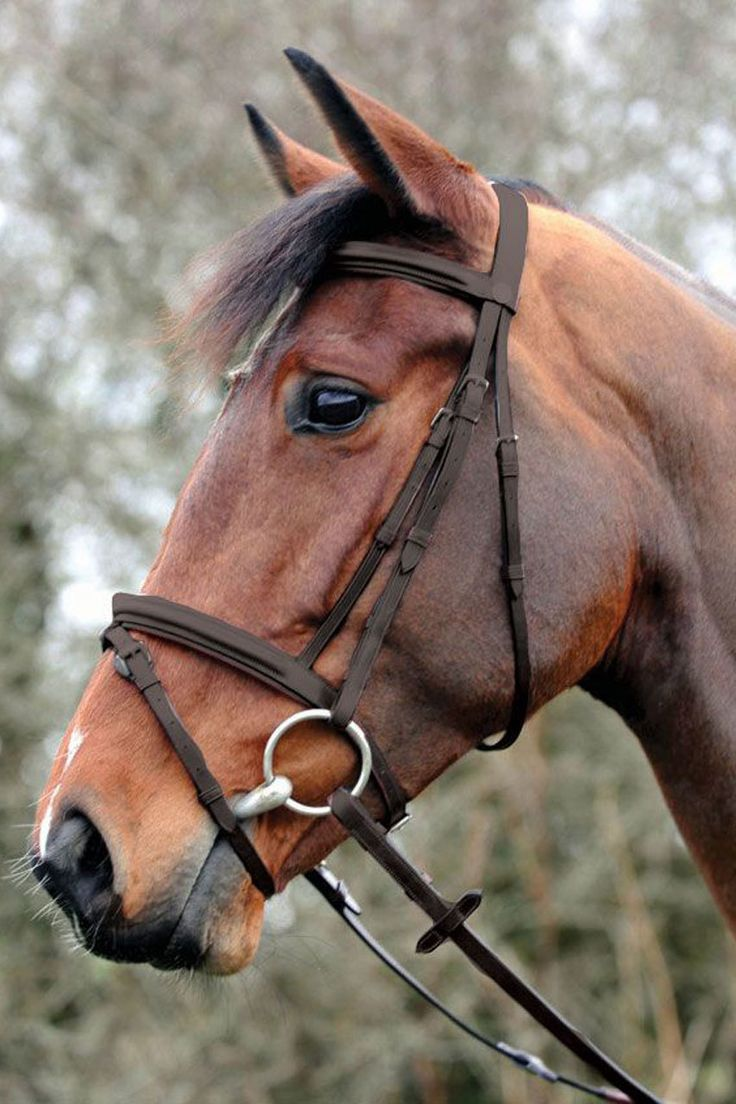 The John Whitaker Flash Bridle is made from finest English leather and comes supplied with its own rubber Reins. Available in your choice of Black or Brown colors in sizes to fit your Pony or Horse.