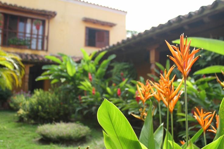 Our tropical garden in the Casa Amarilla