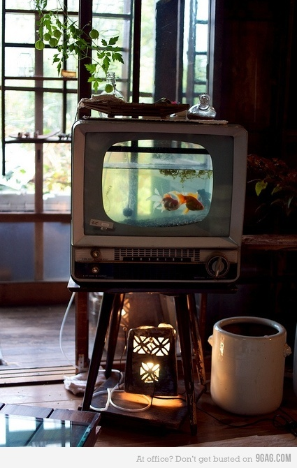 One day you WILL be mine, t.v. aquarium. Oh yes, you will be mine.: Idea, Tvfish, Most Popular Pin, Fish Aquarium, Fish Tanks, Vintage Tv, Old Tv, Tv Fish, Tvs