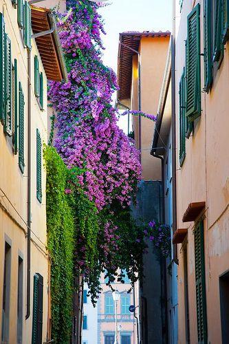 bougainvillea - vicolo Ricciardi, Pisa | par jacqueline.poggi