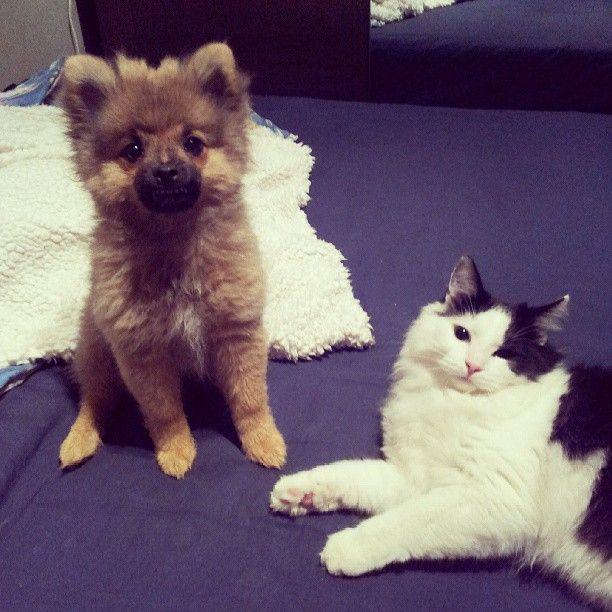 Bästa vänner! Och dem är mina :-) ♥#dog #cat #cute #love #bff #dogcatbff