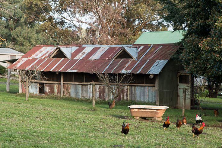 Hoddles Creek Farm