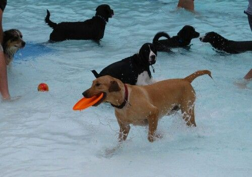 25 best dogs dog toys images on pinterest cutest animals fluffy before the city pool closes for the year they open it to dogs three million dogs click through to video solutioingenieria Images