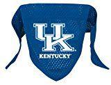 Kentucky Wildcats Dog Bandana