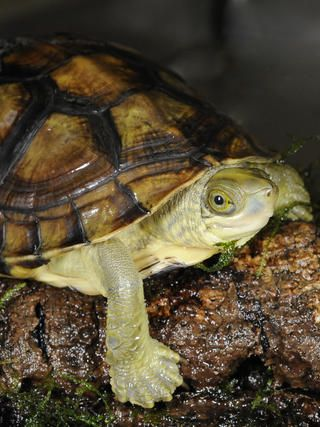 Tortoises & Freshwater Turtles - WCS.org