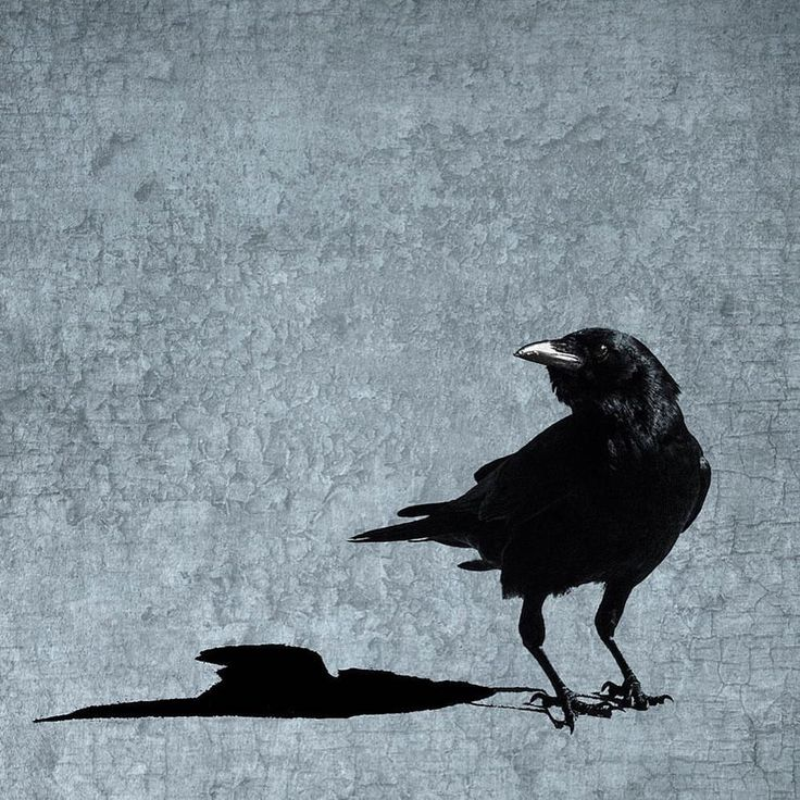"June Hunter (@junehunterimages) on Instagram: ""Me and My Shadow. New print available in my shop, under Prints/Crow Landscapes. Link to web site in…"""