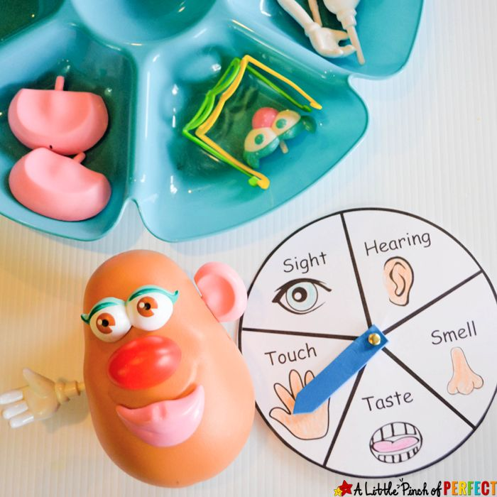 Learning About the 5 Senses Potato Head Game and Free Printable - great idea!