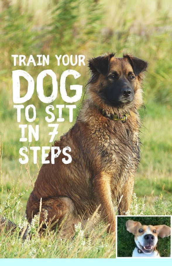 Clicker Training Stay Dogtraining And Potty Training Dogs Outside