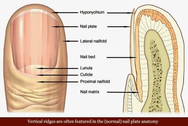 Osm Zdraví UPOZORNĚNÍ Vaše nehty mohou být odeslány EndoRiot