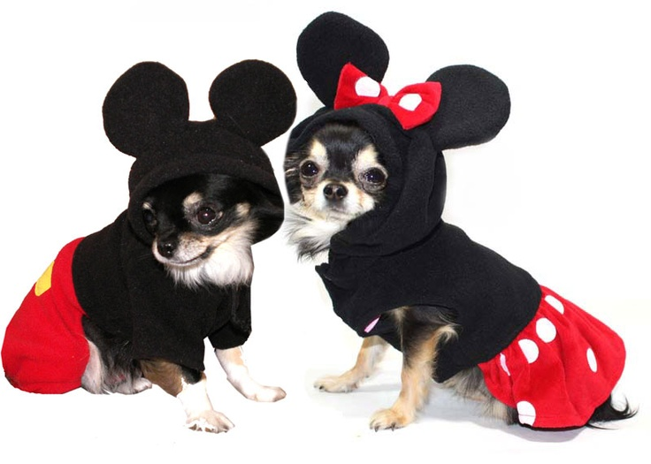 70 Best Chihuahua Costumes images in 2019 | Chihuahua dogs ...