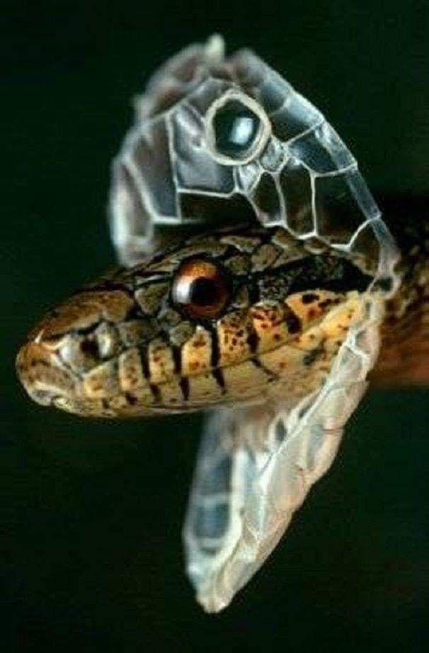 Pin Von Jorge Luis Barroso Y Caballero Auf Serpientes Schlange Reptilien Und Amphibien Heimtiere