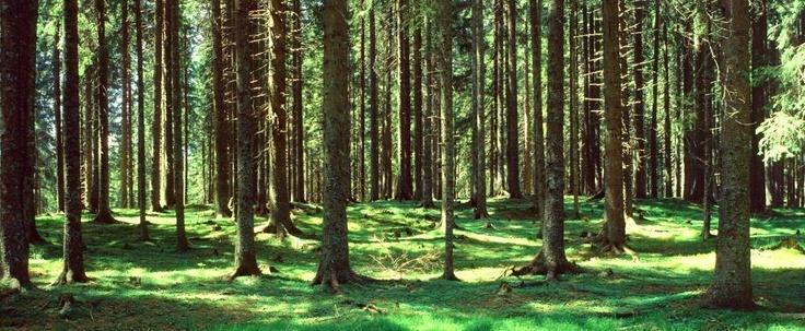 Confort bois d marche environnementale illustrations for Jackson wyoming alloggio cabine