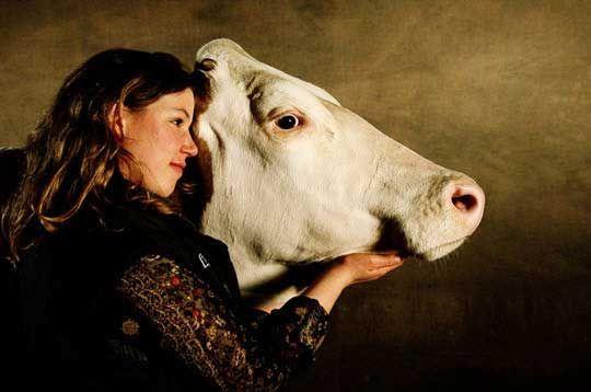 Nougatine, vache Montbéliarde présentée par Claire Vieille-Blanchard