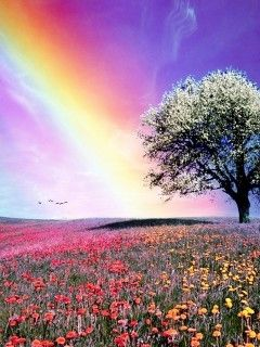 this picture is beautiul in its own way. the colours from the rainbows reflect onto all of the other colours in the picture makes this one beautiful picture.