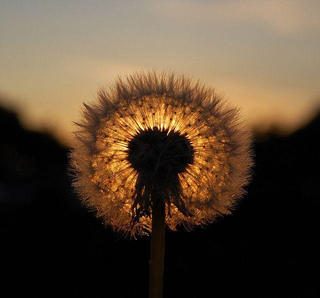 DSC_3906 | Flickr - Photo Sharing!