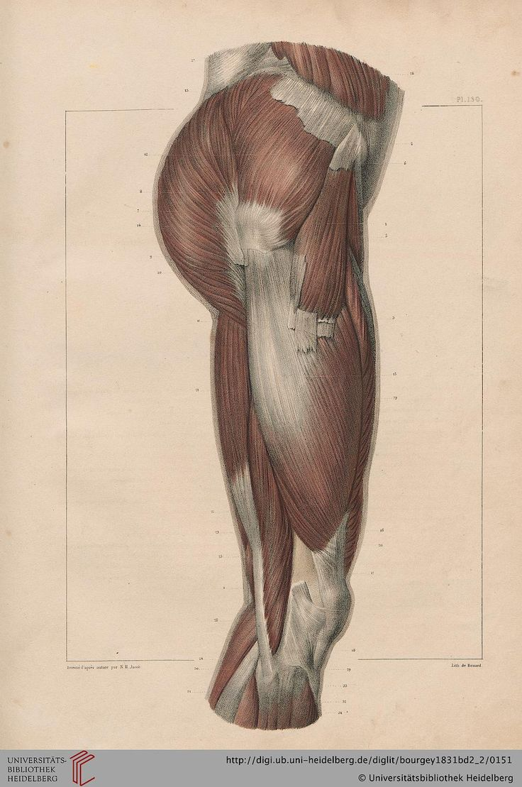 The 143 best Anatomy for Artists images on Pinterest | Anatomy ...