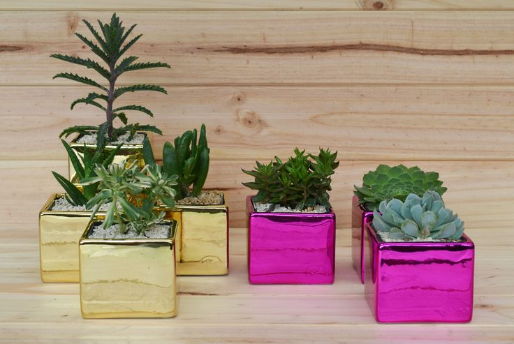 #habibimetallics #handmade #planter #ceramic #succulents Shop our products at www.habibiplantitas.com