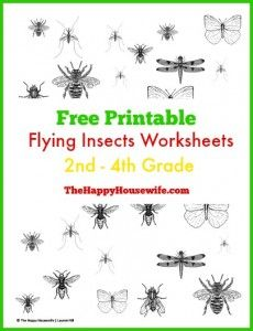 Flying Insects Worksheets: Free Printables