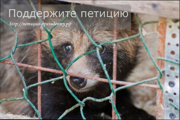 Утвердите права животных и законодательно защитите их от издевательства http://петиция-президенту.рф/утвердите-права-животных/  Уважаемые граждане и гражданки Российской Федерации! В настоящее время мы наблюдаем картину страшной несправедливости. Мы видим, как наши братья меньшие – птицы, звери, и все другие животные терпят жестокость, практически ничем не наказуемую! #праваживотных #защитаживотных #животные