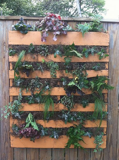 recycled pallet becomes home for plants - I love resusing items in new ways so that they don't just become trash!  Ya'all need to join hometalk to discover who the great creater of this idea was!