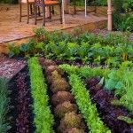 Graceful Beautiful Vegetable Garden