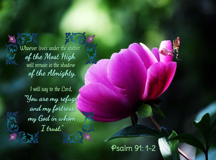 """Psalm 91:1-2 ~ Whoever lives under the shelter of the Most High will remain in the shadow of the Almighty, I will say to the Lord, """"You are my refuge and my fortress, my God in whom I trust"""""""