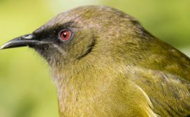 Welcome to Bird Of The Year | Bird Of The Year
