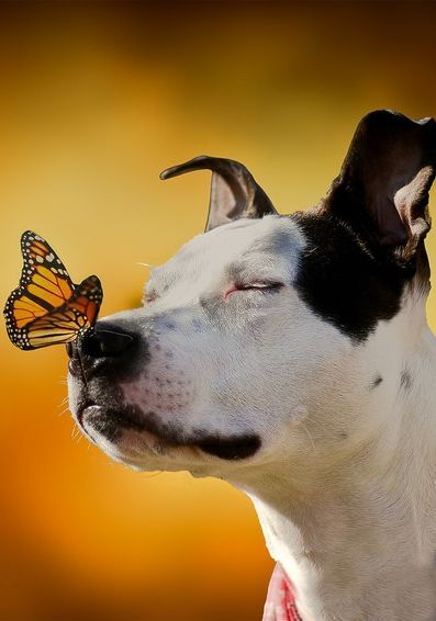 The Pit Bull and the Butterfly | Chronic Rain ... pin by www.StoneArtUSA.com ~ pet memorials for everyone.