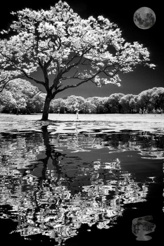 like a dream: Photos, Moon, Black And White, Beautiful, Black White, Landscape Photography, Trees, Pictures, Natural