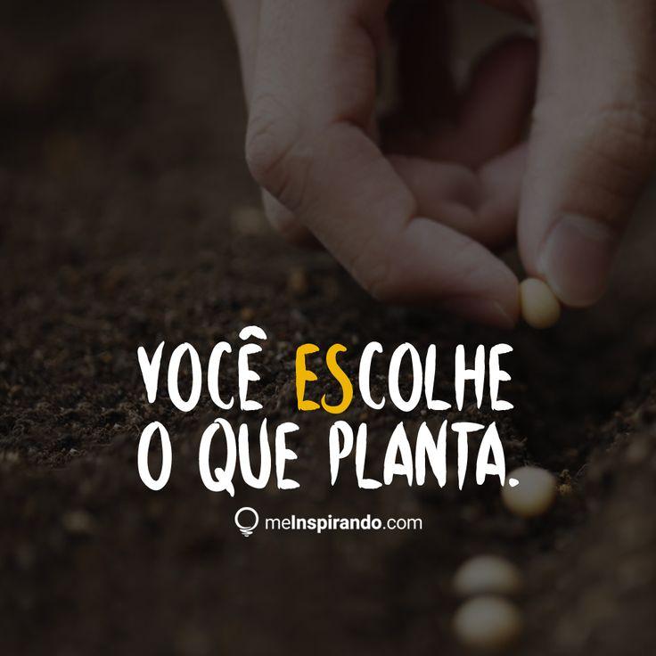 #você #escolhe #plantar