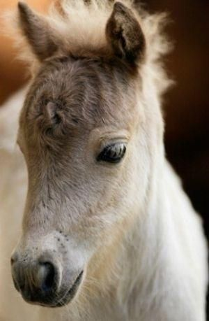 Cute foal by VoyageVisuelle ✿⊱╮adorable little fuzzy horse. So precious! I want to kiss that little nose!