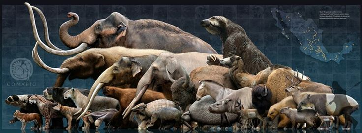 the overkill of the megafauna in end of the big beasts by peter tyson