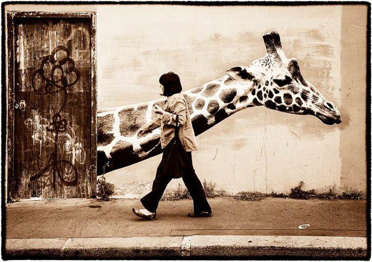 Les créations street art de l'artiste française Sophie, Photographe, qui depuis 2010 réalise descollages d'animaux sauvages dans les rues de Paris, créant
