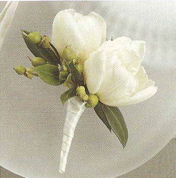 white double dutch tulips are so pretty as a wedding boutonniere. They are accented with green hypericum berries