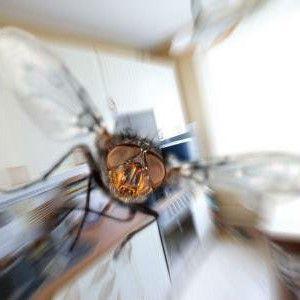 3 простых способа избавиться от мух в доме и на даче