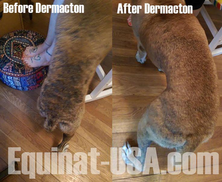 Dermacton Reviews Dog skin allergies, Dog itchy skin
