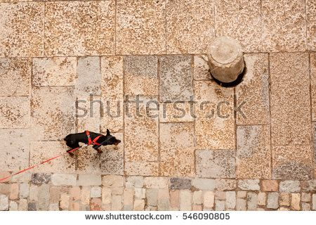 Small dog on the street seen from top. animal, concrete, cone, dog, geometry, leash, pavement, perspective, pet, rectangle, red, round, rule of thirds, square, stone, street, top, walking, wet