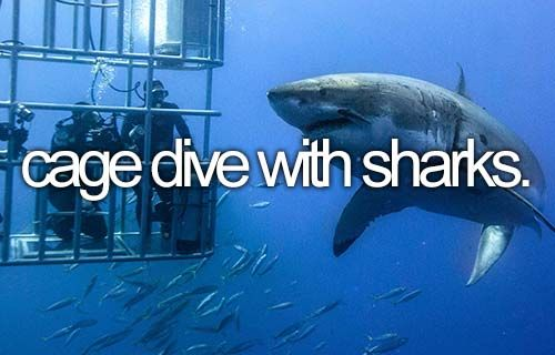 Cage Dive with Sharks | Bucket List