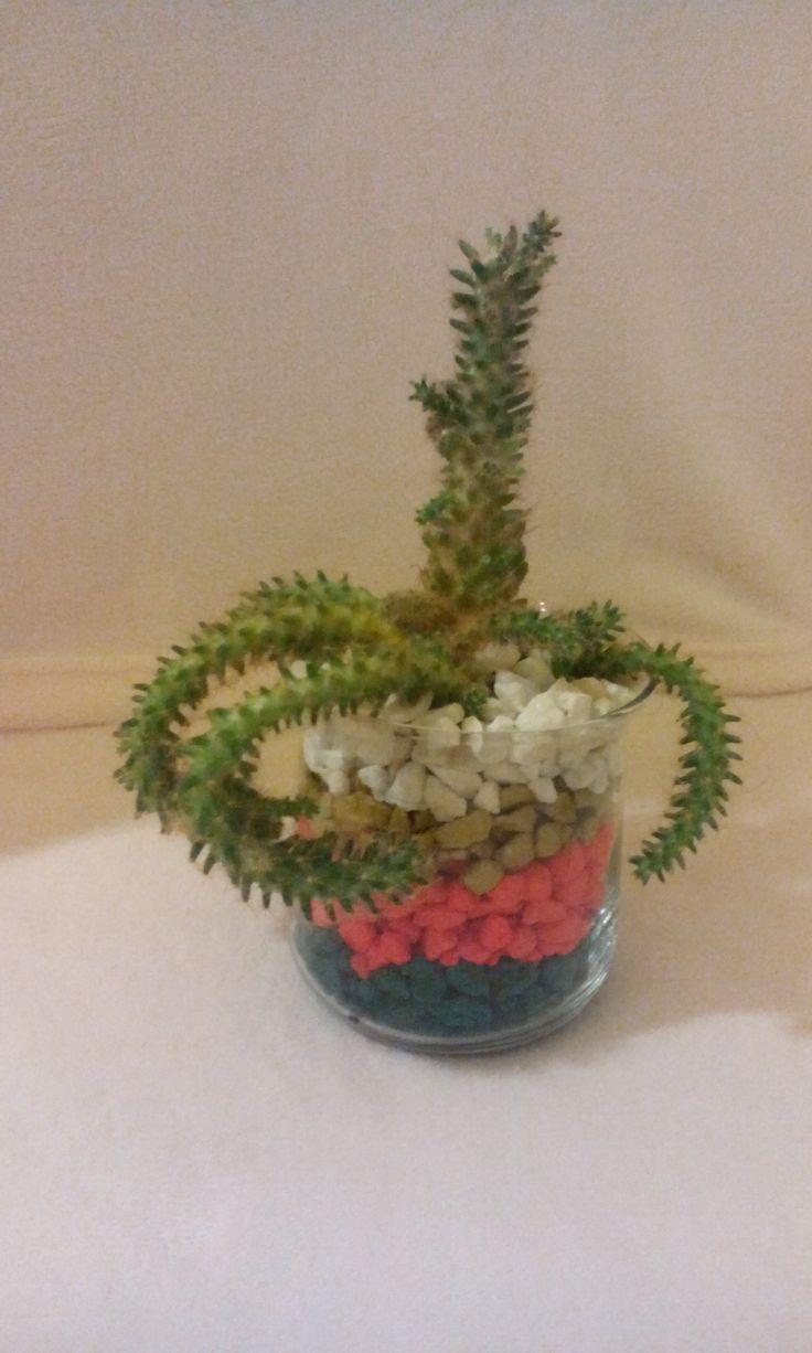 Cactus , minunat de colorat!
