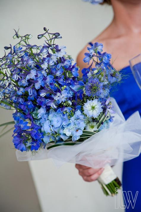 Delphinium Wedding Bouquets | Blue Delphinium bridal bouquet, Kristine & Jen's wedding – Lake ...